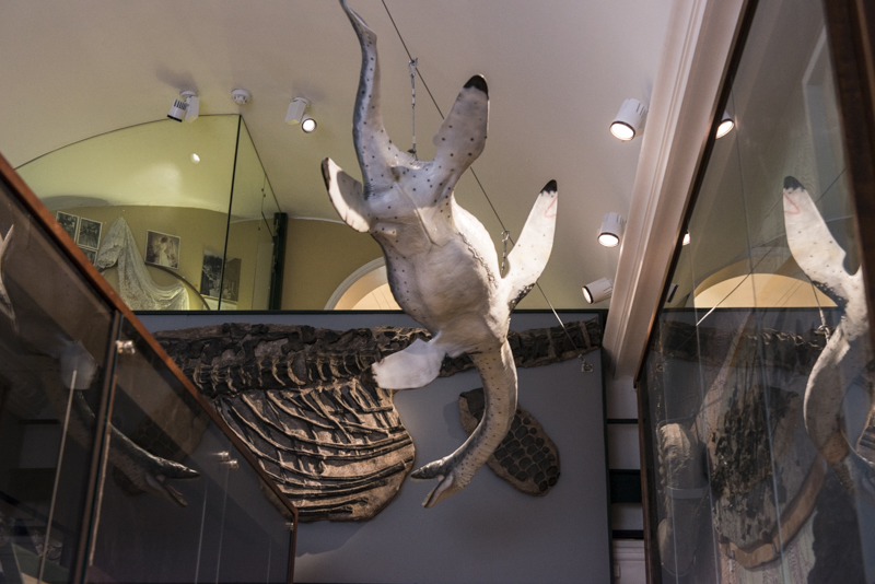 Lyme Regis Museum - The Mary Anning Wing