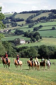 Devenish Pitt ponies