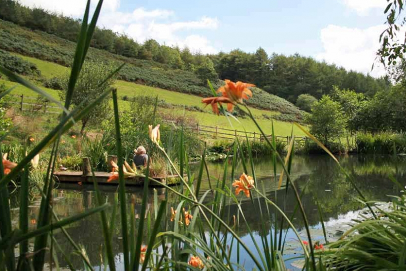 Devon Wildlife Pond