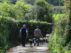 Graham, Winston, Ruby and sheep