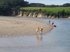 Mothecombe beach - ideal for all the family!