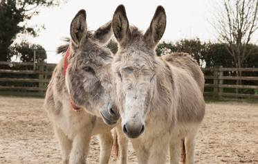 The Donkey Sanctuary, Sidmouth