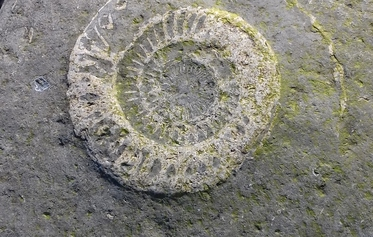 Lyme Regis Fossil Walks