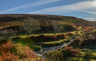 Exmoor Holiday Cottages and B&B