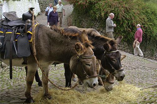 clovelly-donkeys