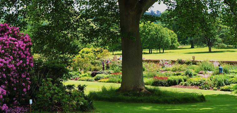 killerton_house_garden_view