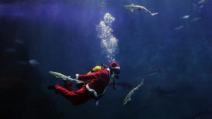 christmas-at-the-aquarium