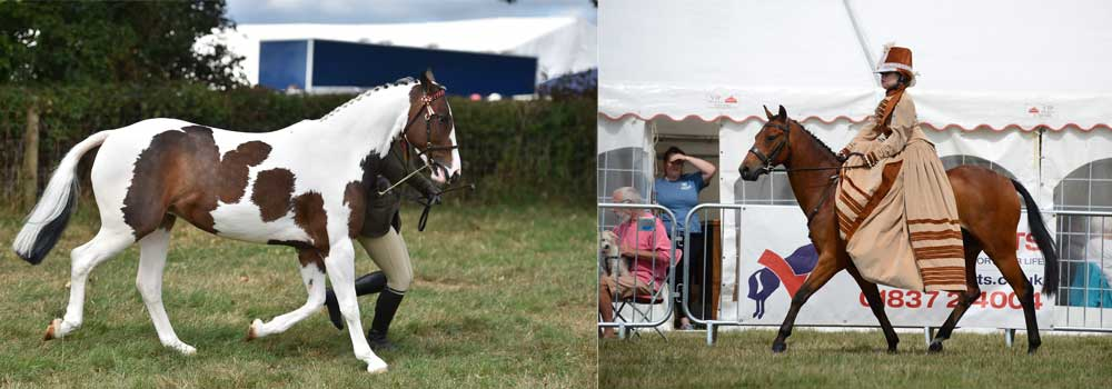Horse showing competitions at Okehampton show in Devon