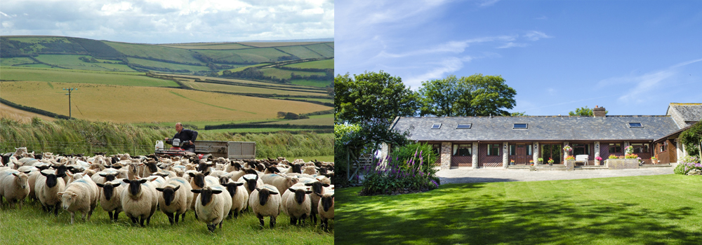 Pickwell Barton, North Devon. Sheep farm and self-catering accommodation