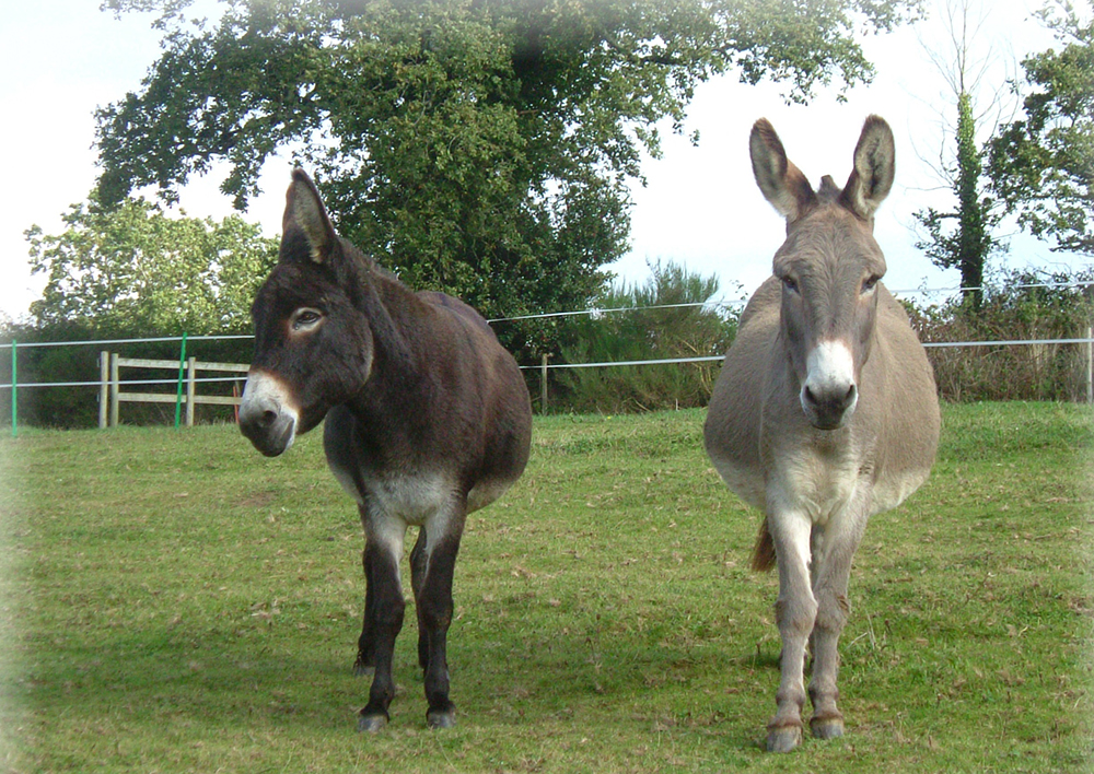 Visit the Donkey Sanctuary for a fun filled day out and for some fantastic food.